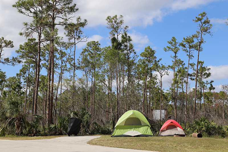 Camping | Everglades Flamingo